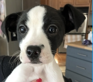 Puppy For Adoption Lux Advisors
